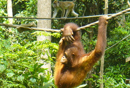 Original Travel's holiday hot spot – hang out in Borneo