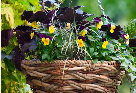 How to make a colourful autumn hanging basket