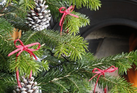 Flora and Fun: Things to do in the garden this December