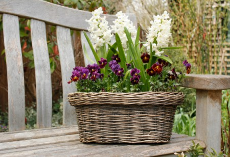 Make the most of spring in your garden