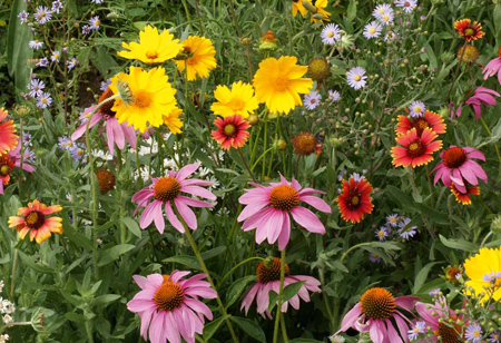 <b> Outdoors: </b> Think you&#8217;re done with flowers for the year? Try these 6 ideas to make your garden beautiful this September