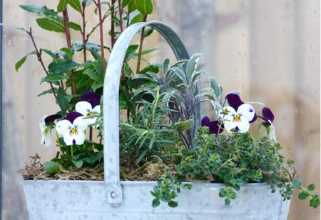 How to grow a herb garden indoors