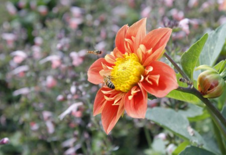 April gardening: grow summer flowers from seed